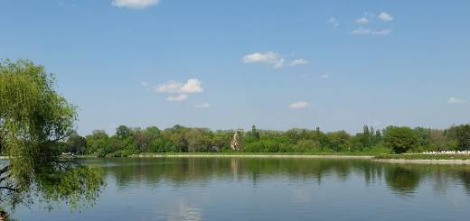 Lacul Buftea: Aleea cu Brazi