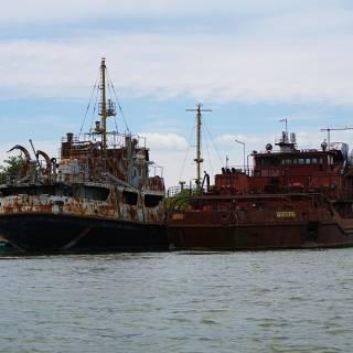 Excursie in Delta Dunarii - Vase la fier vechi pe canalul Sulina
