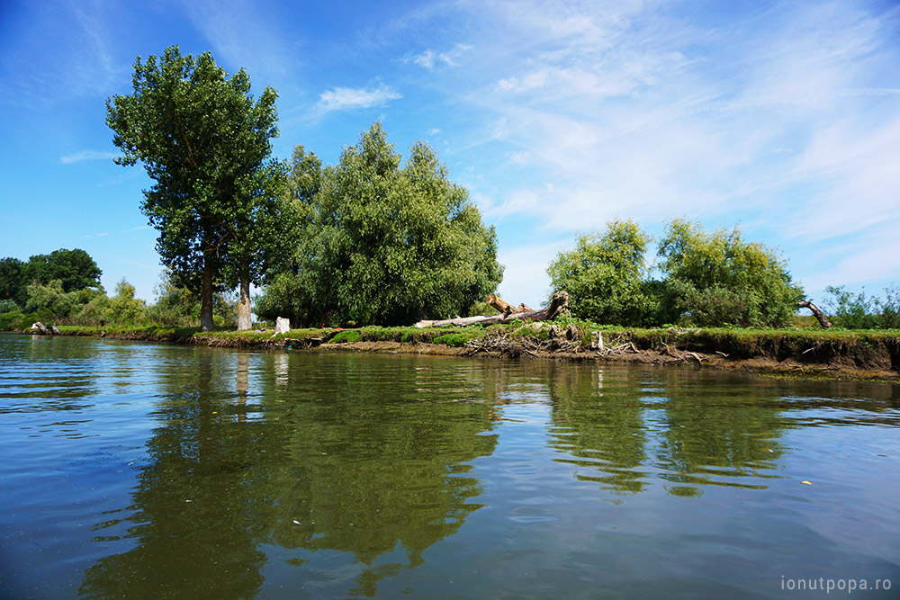 Excursie in Delta Dunarii - busteni distrusi pe malul deltei