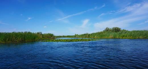 Excursie in Delta Dunarii - stuf, apa si nuferi