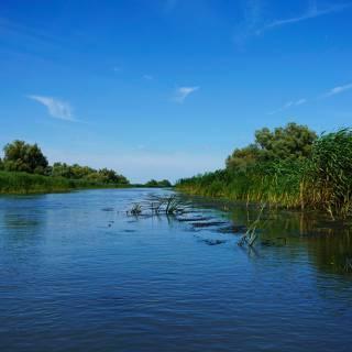 Excursie in Delta Dunarii - stuf in vant pe canale