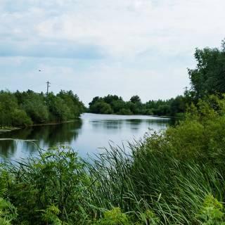 Excursie in Delta Dunarii - vegetatia in Crisan