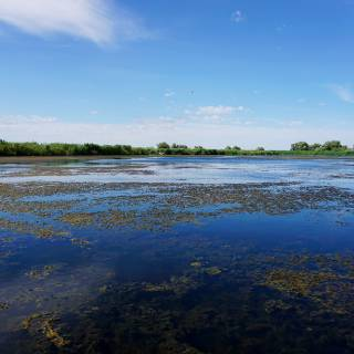 Excursie in Delta Dunarii - vegetatie submarina in apa curata