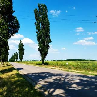Traseu cu bicicleta langa Parcul Natural Comana - DN41 a fost surpriza traseului