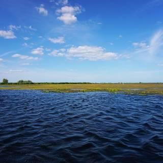 Excursie in Delta Dunarii - insule de vegetatie