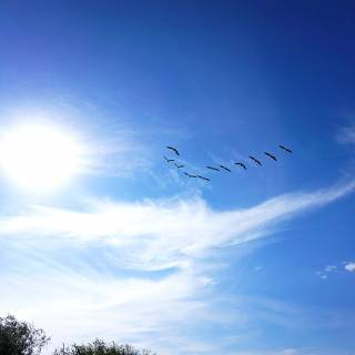 Excursie in Delta Dunarii - pasari care zboara in formatie